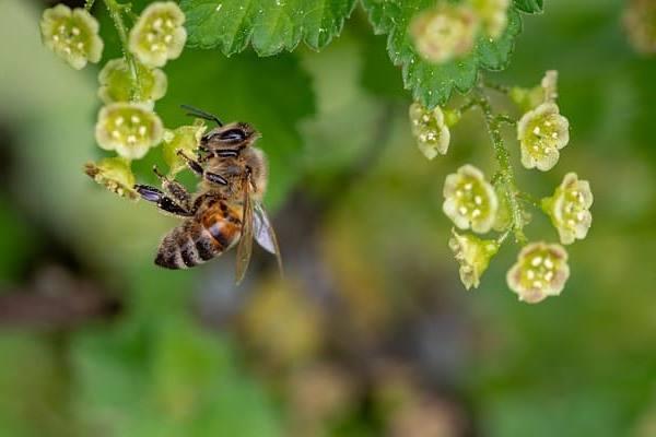 Пчела — божий дар!