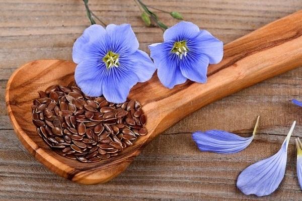 Семя льна – чудо женской красоты