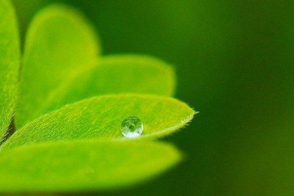 Польза и вред биологически активных добавок (БАДов)