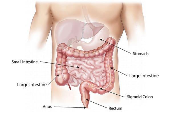 Как правильно очистить кишечник?